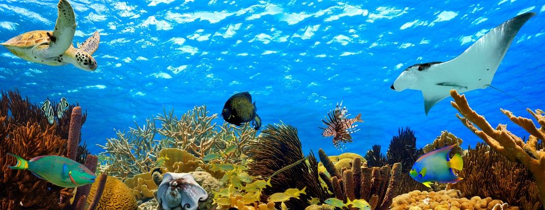 Turismo subacuático: ¿una realidad cercana?